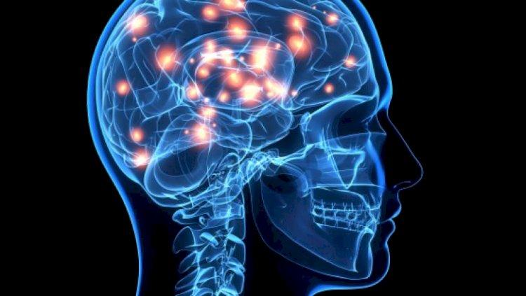 Cum ar putea fi create tratamente revoluționare pentru creier