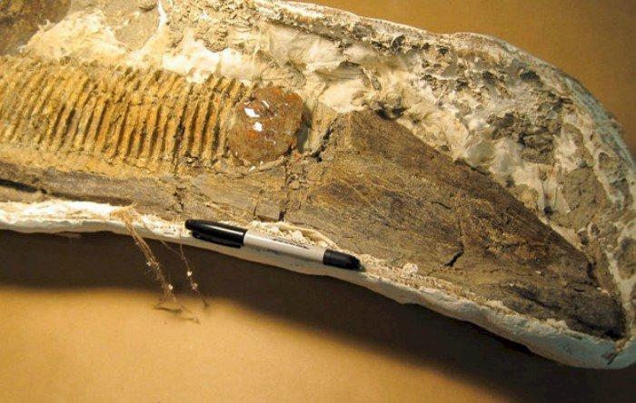 Descoperire impresionantă: Insectă prinsă într-un chihlimbar, încrustat în maxilarul unui dinozaur